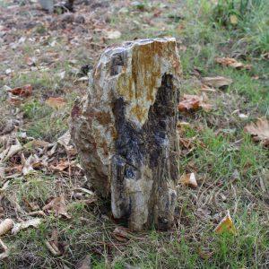 Минерализирано дърво от miteviminerals