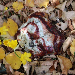 Моокаит върху листа с цветя от miteviminerals